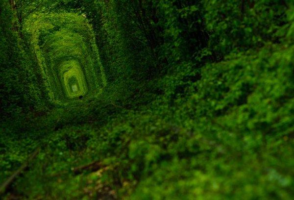 Kleven Ukraine Tunnel of Love